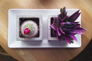 succulent-918663_640